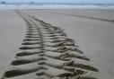 Verläuft das Ecker-Trecking im Sand ?
