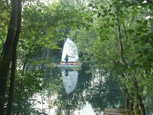Forest-Sailing !