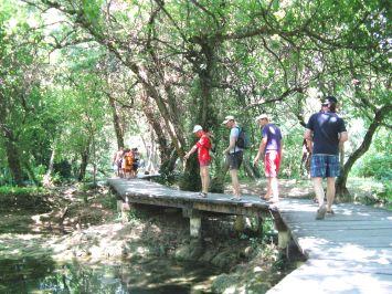 Holzstege durch Wasserwelten !