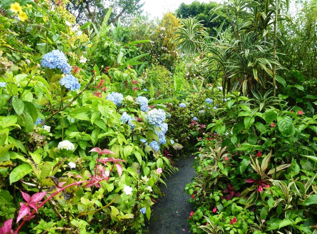 kar13-z18-montreal-garden