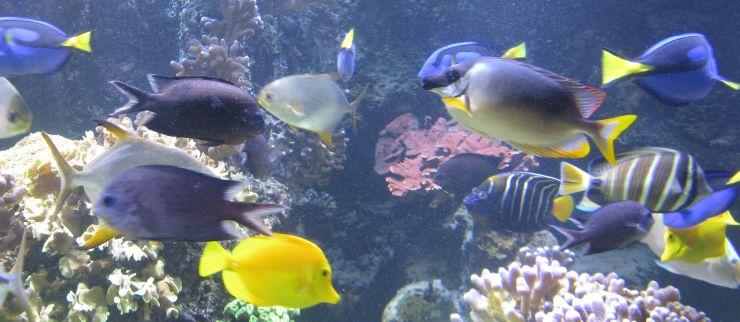 hfa14-88-buntfische